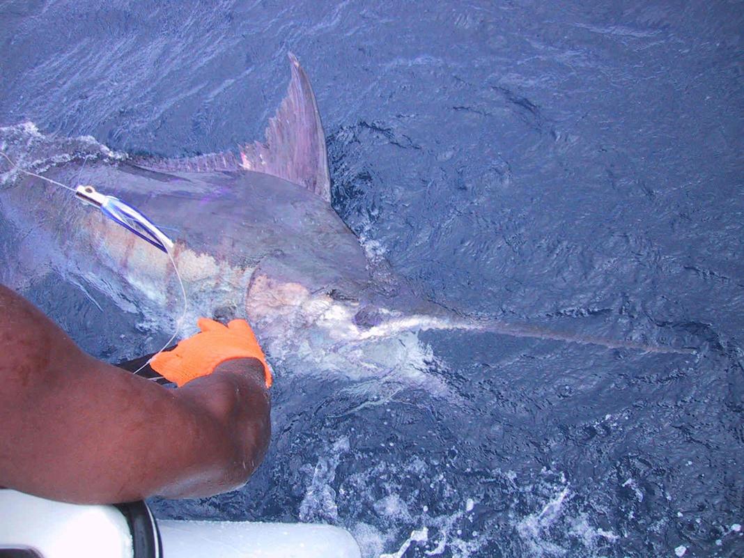 Sport fishing grenada fishing charters best deep sea for Best deep sea fishing