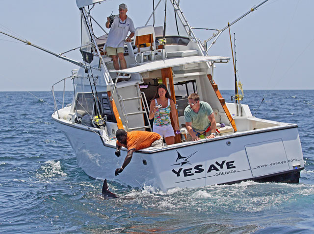 Sport Fishing Grenada Charters Best Deep Sea In The Caribbean